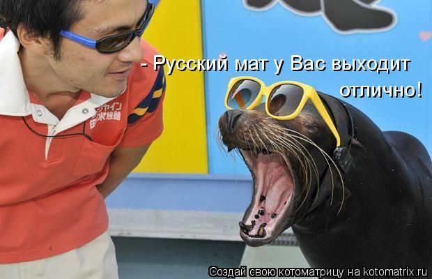 Котоматрица: - Русский мат у Вас выходит отлично!