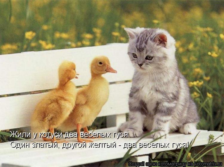 Котоматрица: Жили у котуси два веселых гуся Один златый, другой желтый - два веселых гуся!