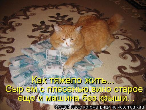 Котоматрица: Как тяжело жить... Сыр ем с плесенью,вино старое еще и машина без крыши...