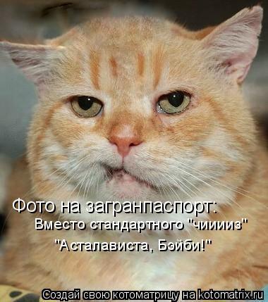 "Котоматрица: Фото на загранпаспорт: Вместо стандартного ""чииииз"" ""Асталависта, Бэйби!"""