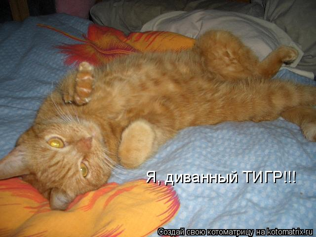 Котоматрица: Я, диванный ТИГР!!!