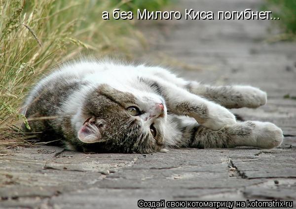 Котоматрица: а без Милого Киса погибнет...
