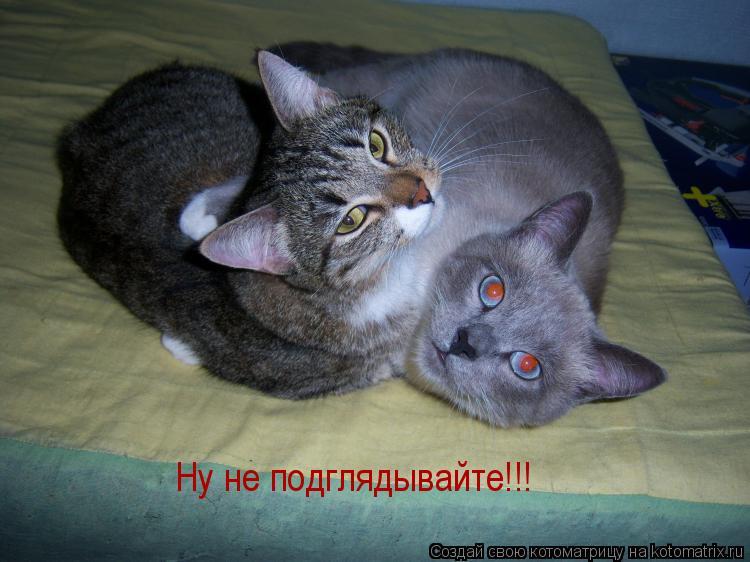 Котоматрица: Ну не подглядывайте!!!