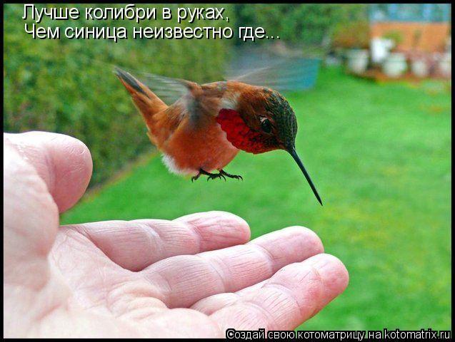 Котоматрица: Лучше колибри в руках, Чем синица неизвестно где...