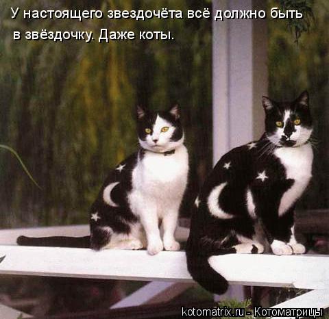 Котоматрица: У настоящего звездочёта всё должно быть в звёздочку. Даже коты.