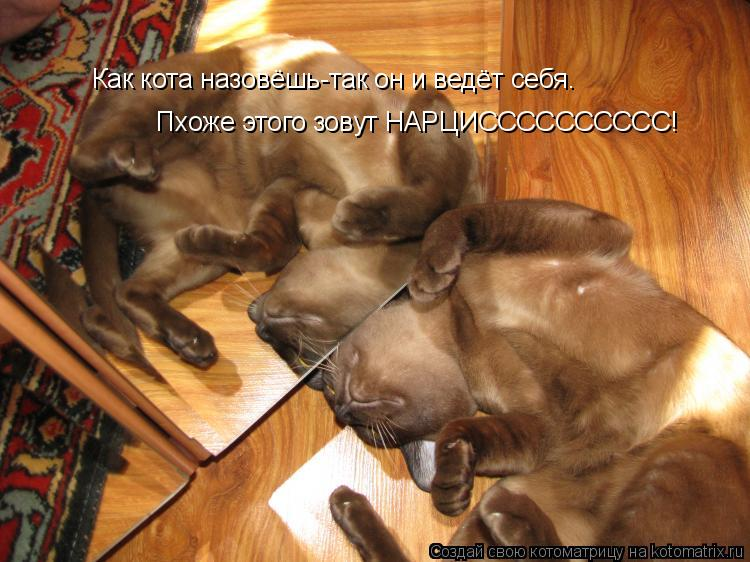 Котоматрица: Как кота назовёшь-так он и ведёт себя. Пхоже этого зовут НАРЦИСССССССССС!