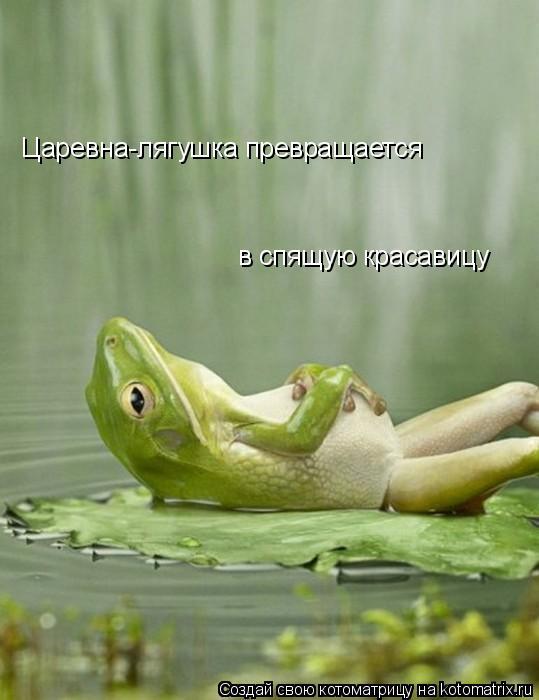 Котоматрица: Царевна-лягушка превращается  в спящую красавицу