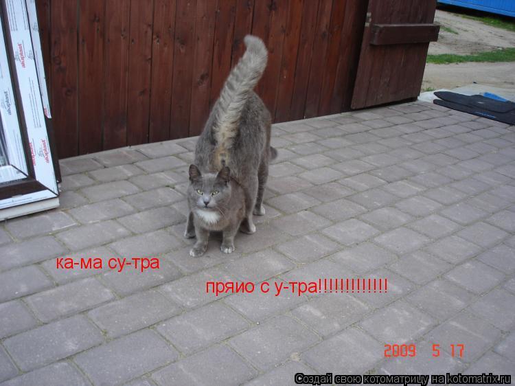 Котоматрица: ка-ма су-тра   пряио с у-тра!!!!!!!!!!!!!