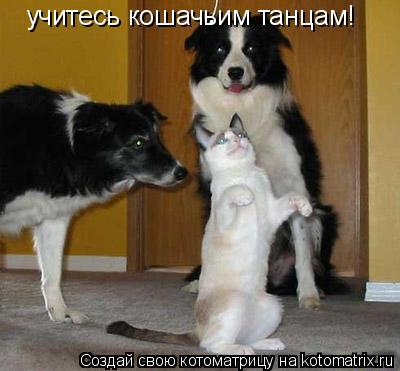 Котоматрица: учитесь кошачьим танцам!