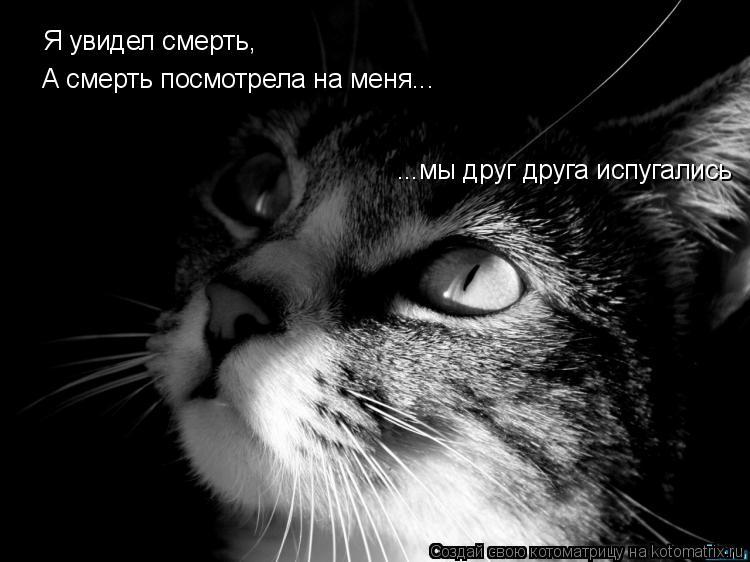 Котоматрица: Я увидел смерть, А смерть посмотрела на меня... ...мы друг друга испугались