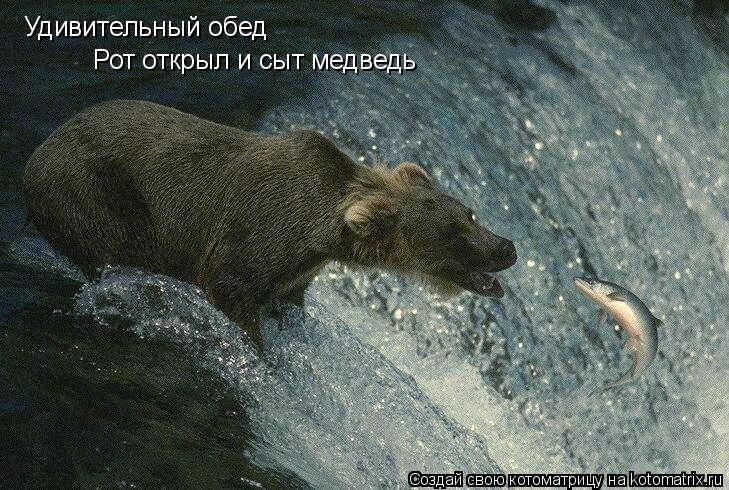 Котоматрица: Удивительный обед Рот открыл и сыт медведь