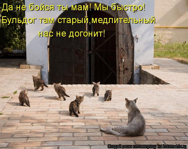 Котоматрица: Да не бойся ты мам! Мы быстро! Бульдог там старый,медлительный  нас не догонит!