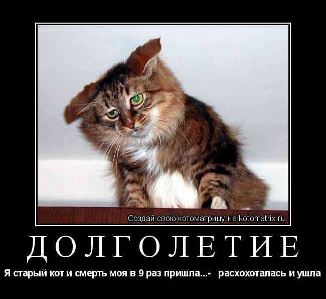 Котоматрица: Долголетие Я старый кот и смерть моя в 9 раз пришла...-   расхохоталась и ушла