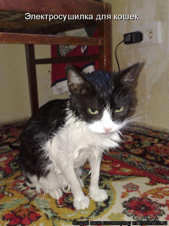Котоматрица: Электросушилка для кошек