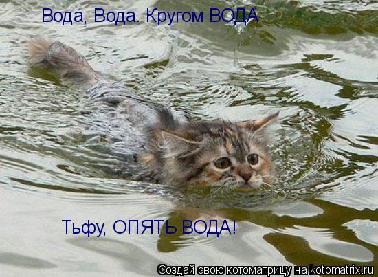 Котоматрица: Вода, Вода. Кругом ВОДА Тьфу, ОПЯТЬ ВОДА!