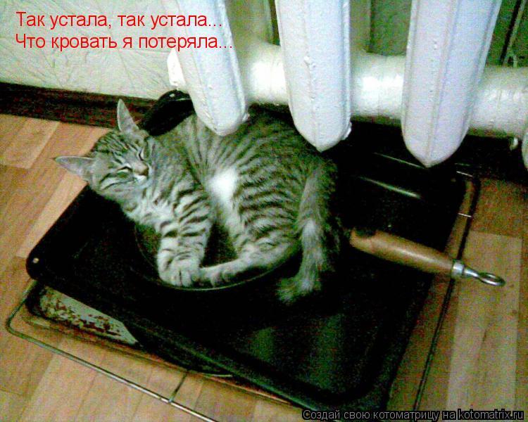 Котоматрица: Так устала, так устала... Что кровать я потеряла...