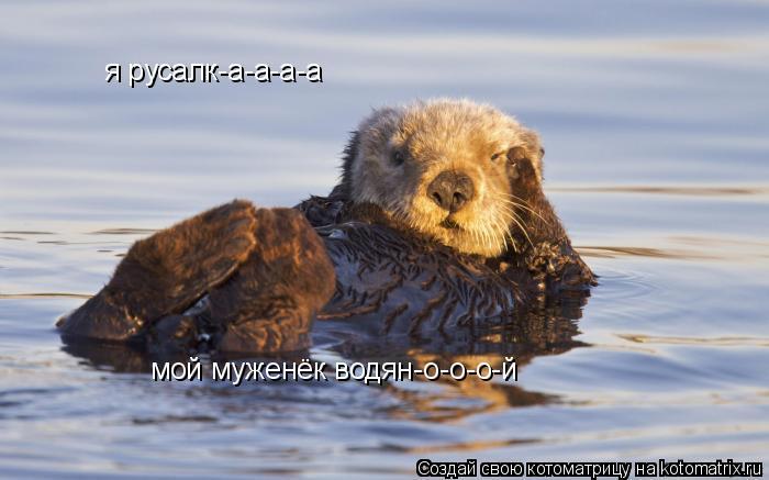 Котоматрица: я русалк-а-а-а-а мой муженёк водян-о-о-о-й
