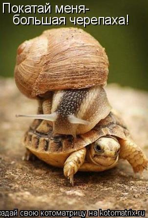 Котоматрица: Покатай меня- большая черепаха!