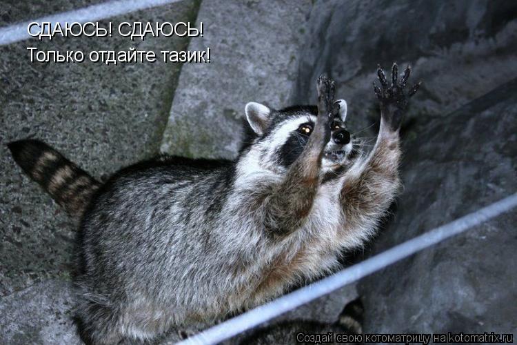 Котоматрица: СДАЮСЬ! СДАЮСЬ! Только отдайте тазик!