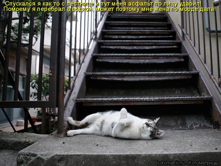 Котоматрица: Спускался я как то с лестнице и тут меня асфальт по лицу ударил!  Помоему я перебрал с водкой, может поэтому мне жена по морде дала!