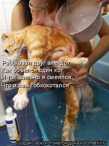 """Котоматрица: Рассказал друг анекдот Как объелся один кот Что и сам """"обхохотался"""" И так  сильно я смеялся"""