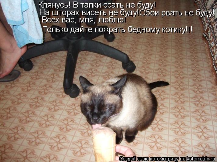 Котоматрица: Клянусь! В тапки ссать не буду! На шторах висеть не буду! Обои рвать не буду! Всех вас, мля, люблю! Только дайте пожрать бедному котику!!!