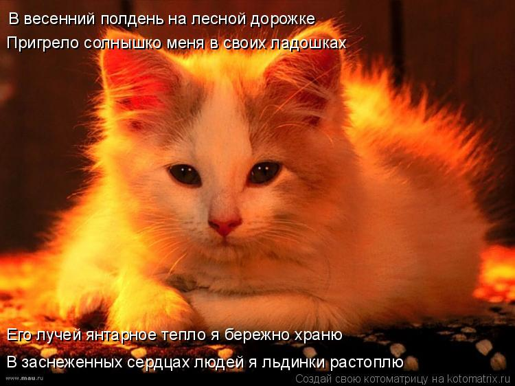 Котоматрица: В весенний полдень на лесной дорожке Его лучей янтарное тепло я бережно храню В заснеженных сердцах людей я льдинки растоплю Пригрело солн
