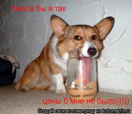 Котоматрица: Умела бы я так цены б мне не было))))) цены б мне не было)))))