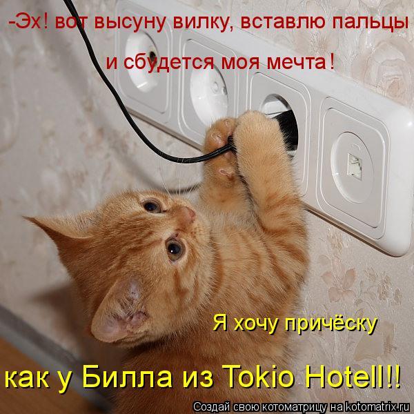 Котоматрица: -Эх! вот высуну вилку, вставлю пальцы  и сбудется моя мечта ! Я хочу причёску  как у Билла из Tokio Hotell!!