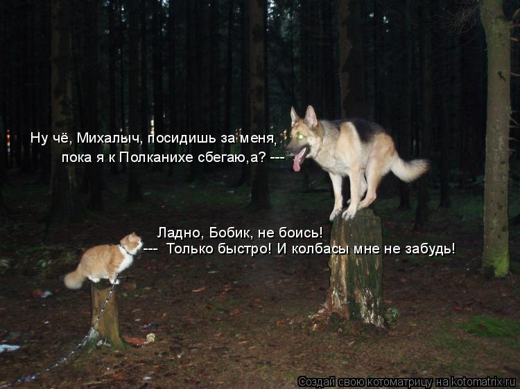Котоматрица: Ну чё, Михалыч, посидишь за меня , пока я к Полканихе сбегаю,а? ---   Ладно, Бобик, не боись! ---  Только быстро! И колбасы мне не забудь!