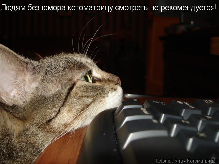 Котоматрица: Людям без юмора котоматрицу смотреть не рекомендуется!