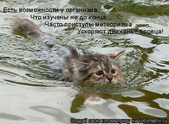 Котоматрица: Есть возможности у организма, Что изучены не до конца: Часто приступы метеоризма Ускоряют движенье пловца!