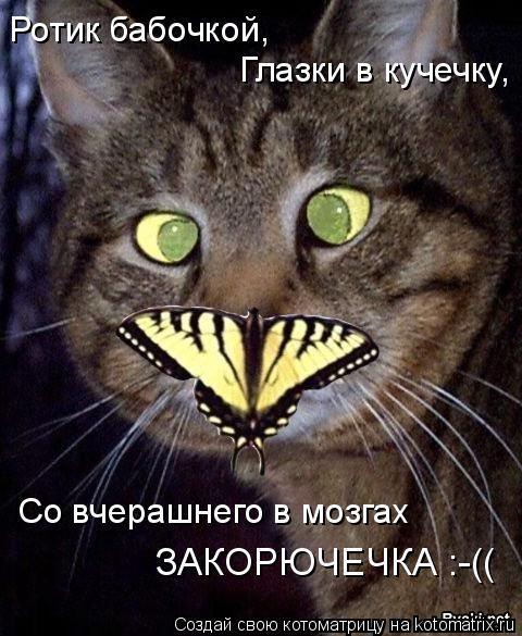 Котоматрица: Ротик бабочкой, Глазки в кучечку, Со вчерашнего в мозгах  ЗАКОРЮЧЕЧКА :-((