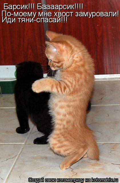 Котоматрица: Барсик!!! Баааарсик!!!! По-моему мне хвост замуровали!!! Иди тяни-спасай!!!