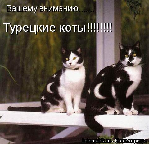 Котоматрица: Вашему вниманию........ Вашему вниманию........ Турецкие коты!!!!!!!!