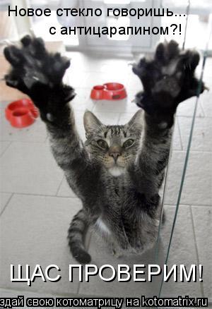 Котоматрица: Новое стекло говоришь... с антицарапином?! ЩАС ПРОВЕРИМ!