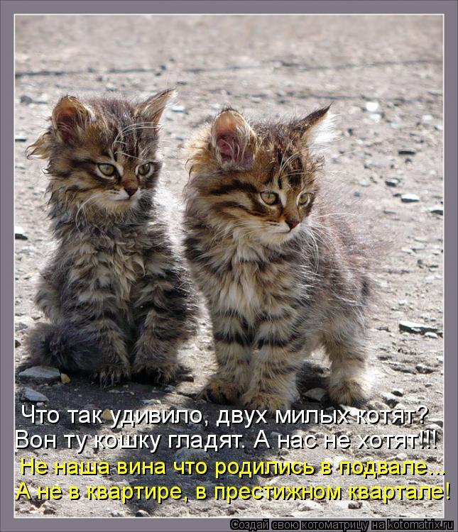 Котоматрица: Что так удивило, двух милых котят? Вон ту кошку гладят. А нас не хотят!!! Не наша вина что родились в подвале... А не в квартире, в престижном ква