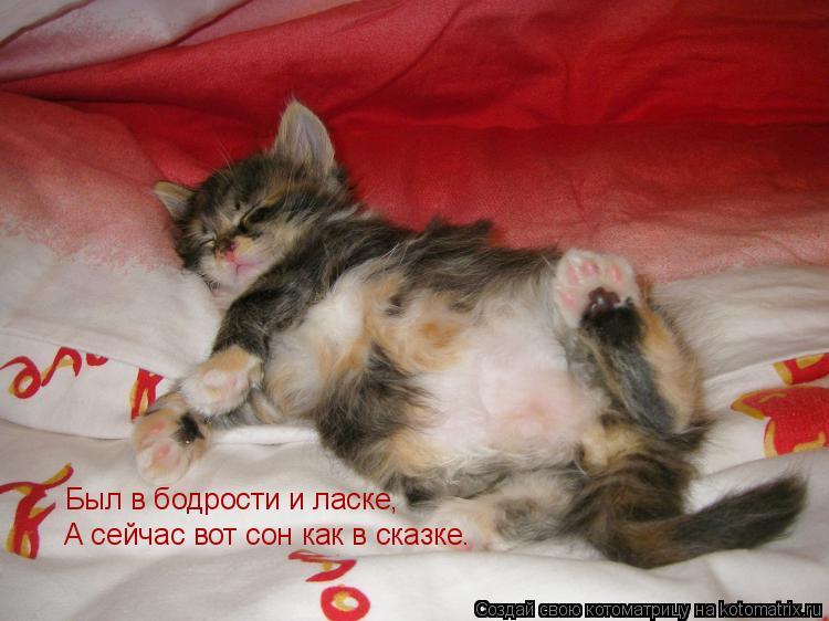 Котоматрица: Был в бодрости и ласке, А сейчас вот сон как в сказке.