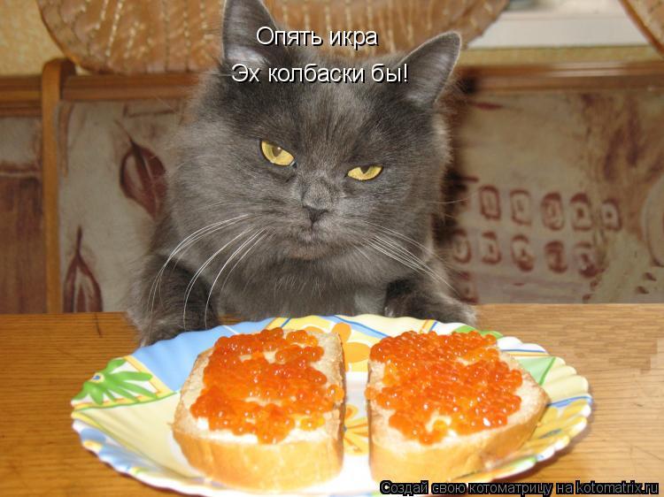Котоматрица: Опять икра Эх колбаски бы!
