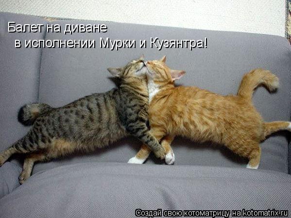 Котоматрица: Балет на диване в исполнении Мурки и Кузянтра!