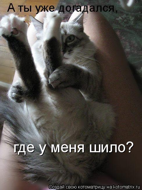 Котоматрица: А ты уже догадался, где у меня шило?