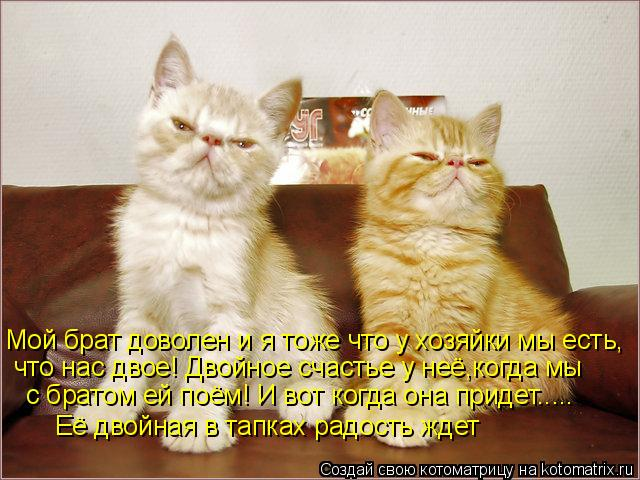 Котоматрица: Мой брат доволен и я тоже что у хозяйки мы есть, что нас двое! Двойное счастье у неё,когда мы  с братом ей поём! И вот когда она придет..... Её дво