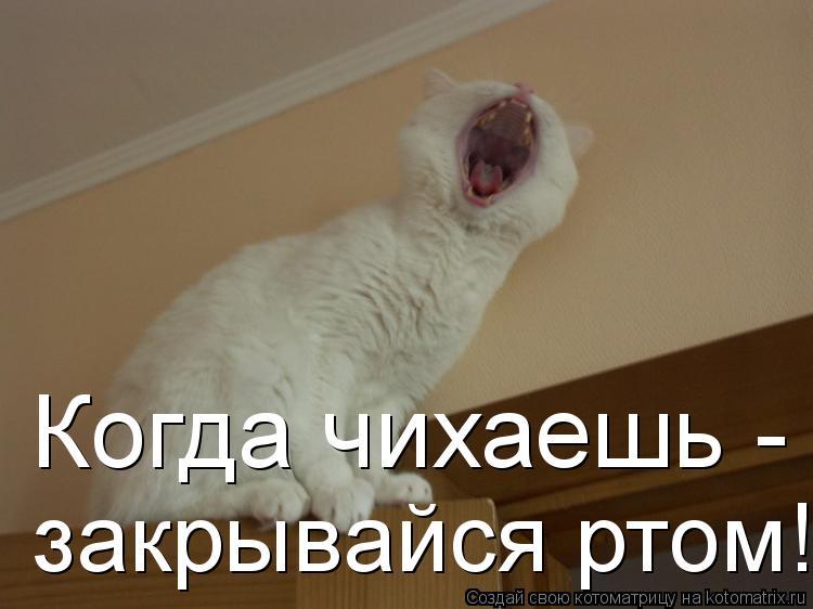 Котоматрица: Когда чихаешь -   закрывайся ртом!