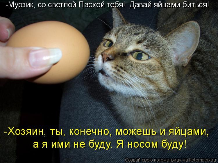 Котоматрица: -Мурзик, со светлой Пасхой тебя!  Давай яйцами биться! а я ими не буду. Я носом буду! -Хозяин, ты, конечно, можешь и яйцами,