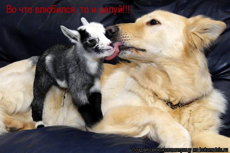 Котоматрица: Во что влюбился, то и целуй!!!