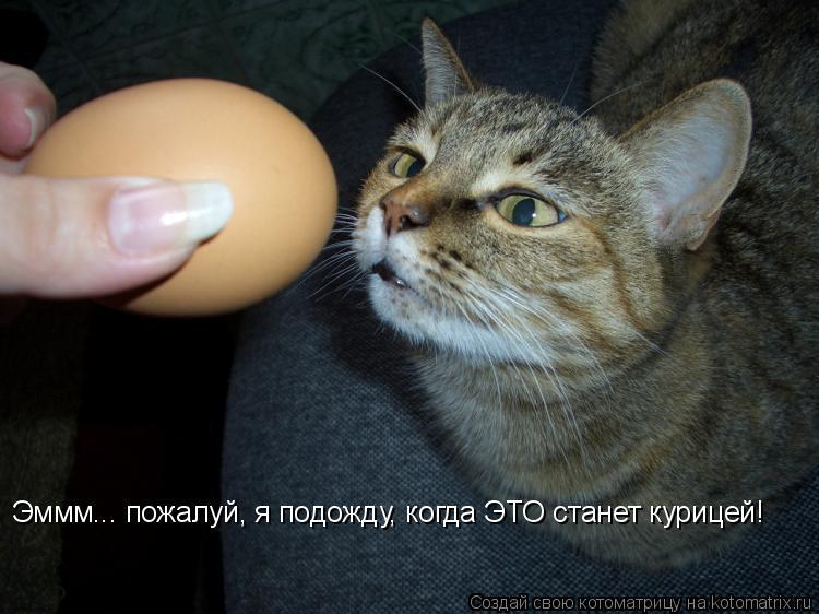 Котоматрица: Эммм... пожалуй, я подожду, когда ЭТО станет курицей!