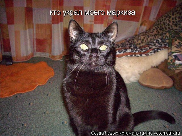 Котоматрица: кто украл моего маркиза