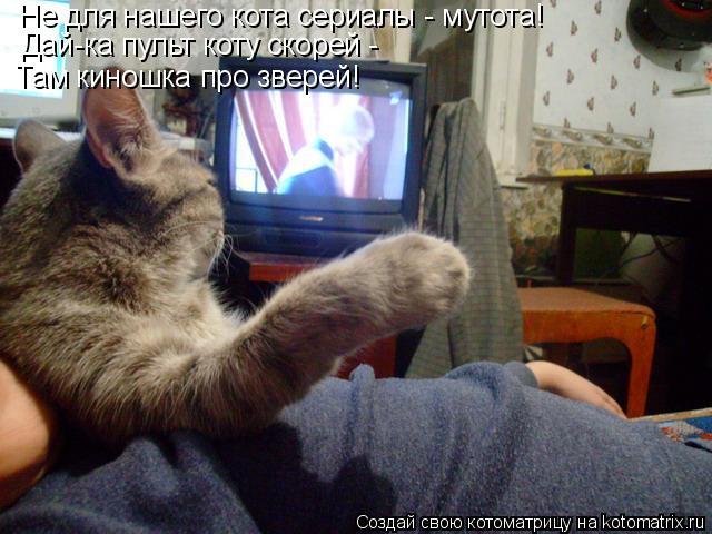 Котоматрица: Не для нашего кота сериалы - мутота! Дай-ка пульт коту скорей -  Там киношка про зверей!