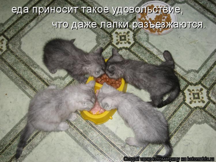 Котоматрица: еда приносит такое удовольствие, что даже лапки разъезжаются.