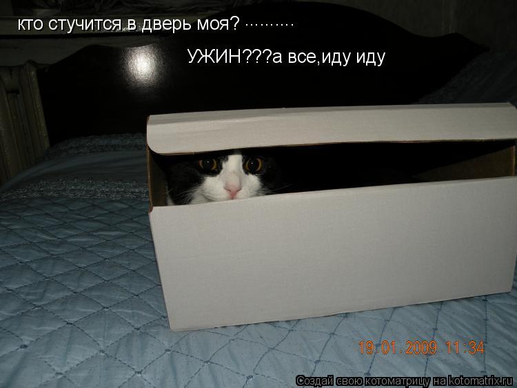 Котоматрица: кто стучится в дверь моя? .......... УЖИН???а все УЖИН???а все,иду иду